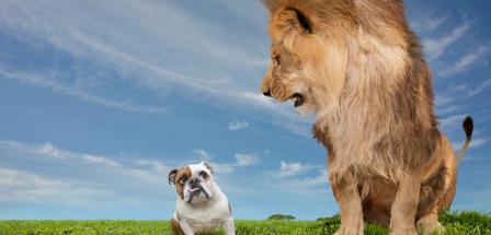 La lucha en el ecommerce: David contra Goliat