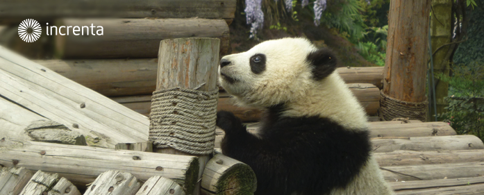 Cómo optimizar tu blog profesional para Panda 4.0 de Google